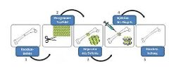 Scientists at the IBA Heiligenstadt eV develop 3D support structures for bone regeneration