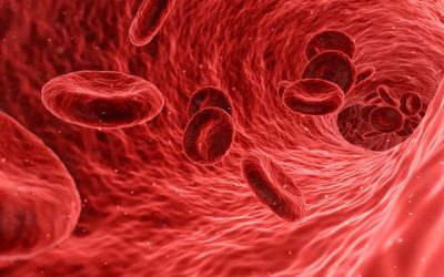 Bio-Printing the First Organic Blood Vessel